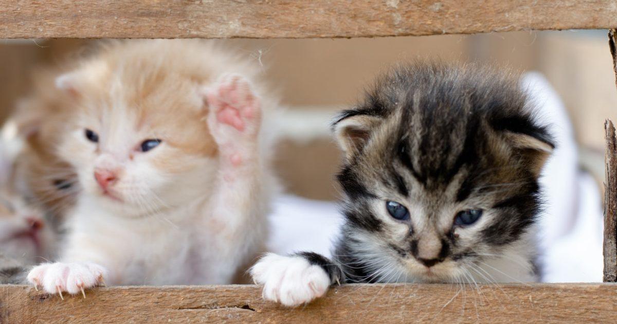 猫3匹の写真
