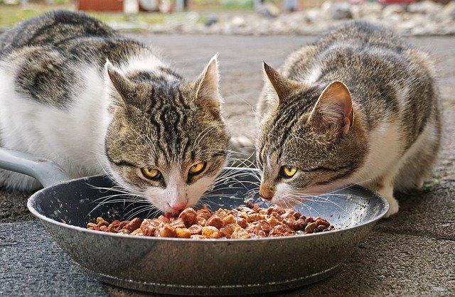 猫たちがエサを食べている写真