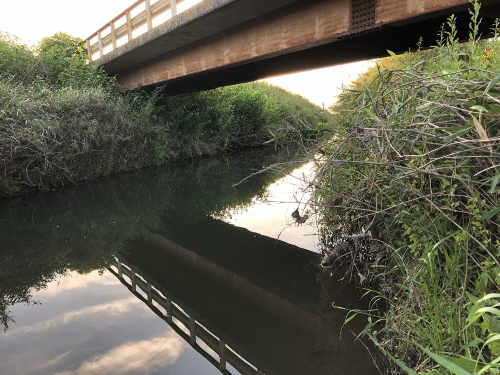 西印旛沼流入河川手繰川中流