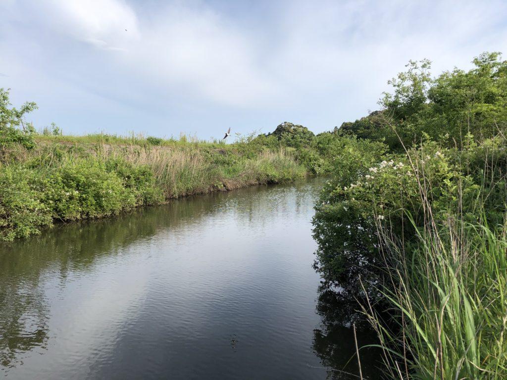 師戸川の写真