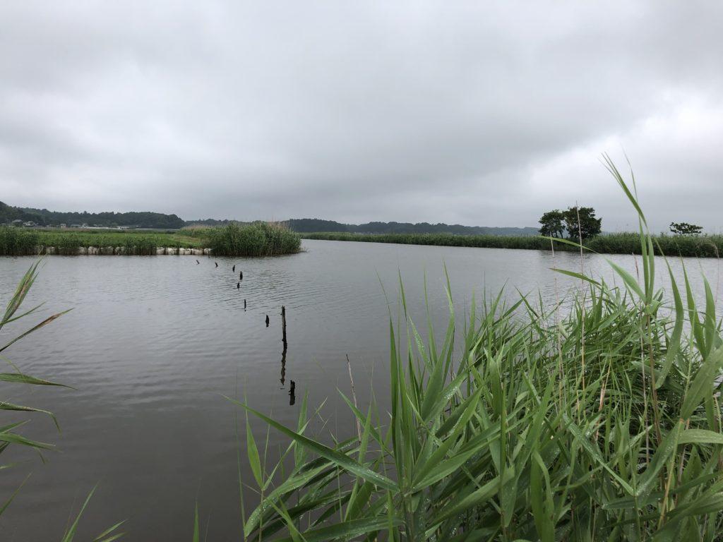 印旛沼 中央排水路