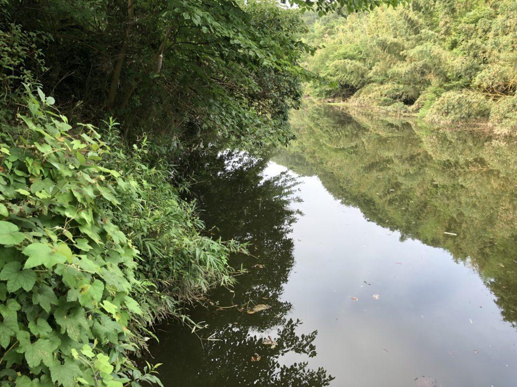 花見川中流の写真