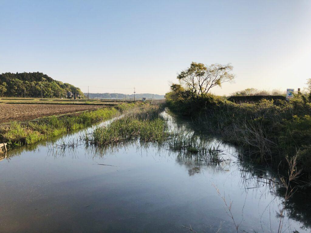 印旛沼水系 農業用水路2
