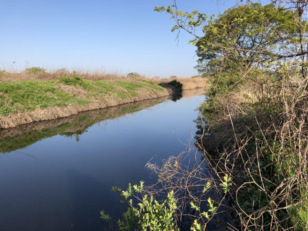 印旛沼水系農業用水路3