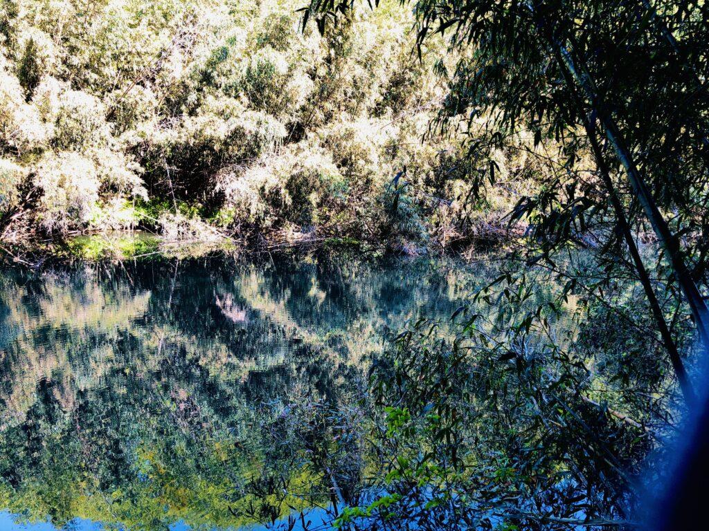 花見川の中流2