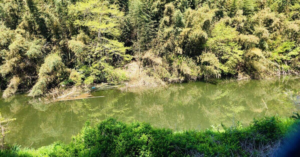 花見川 中流の様子