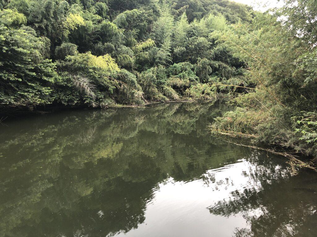 花見川柏井橋付近