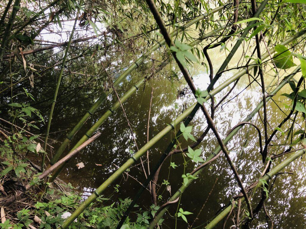 花見川のレイダウン